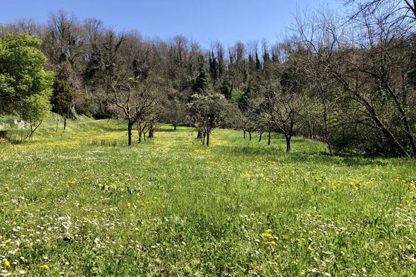 Nonostante tutto, la primavera